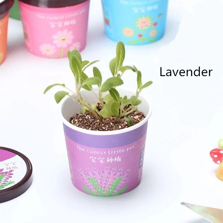 Mini Creative Plantes En Pot De Lavande De Tournesol et De Légumes Plantes Pots Miniature Home Garden Plant En Pot Bébé Cadeau