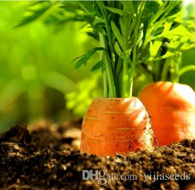 /bag carrot seeds Organic Heirloom seeds vegetables fruit Five inches ginseng carrot seeds potted plant for home garden