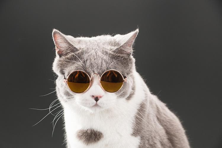 Art- und Weisegläser kleine Haustier-Hundekatzen-Sonnenbrille-Eyewear-Schutz Haustier-kühle Gläser Haustier-Sonnenbrille-Fotos Requisiten färben nach dem Zufall