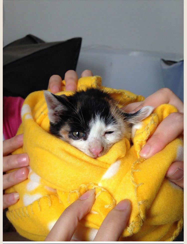 Petite Paw Print Pet Cat Lits Fleece Soft Warmer Belle Couverture 60 * 70cm Chien Coussin Mat Couverture De Chien Couverture IB631