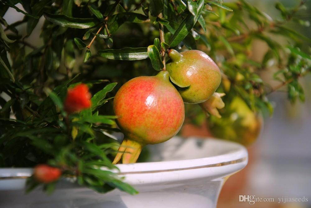 bonsai pomegranate seeds very sweet Delicious fruit seeds,succulents Tree seeds mini bonsai for home gift