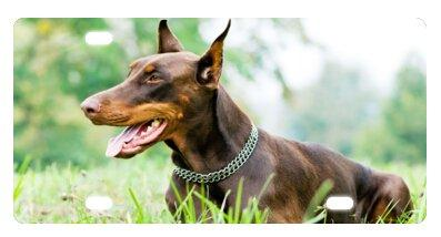 Doberman Pinscher Novedad Matrícula Placa frontal decorativa 6