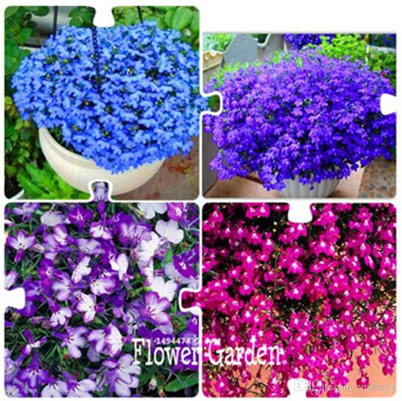 2019 Big Promotion Bag Lobelia Seedsbonsai Flower Seeds Creeper