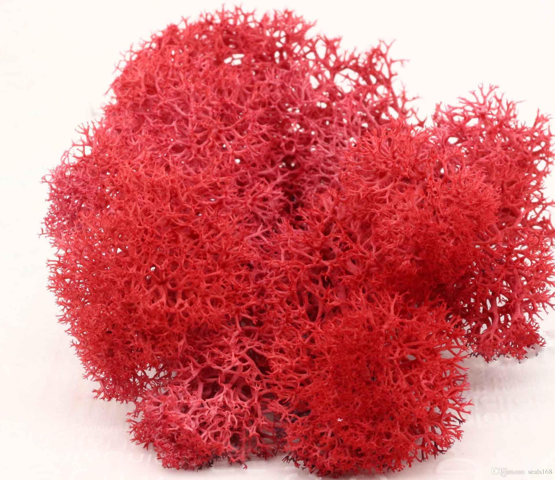 500g DIY Renkli Moss Çiçekler Asla Withers Çiçek Malzemeleri Ev Düğün Dekor Için HH7-911 Mikroskobik bonsai