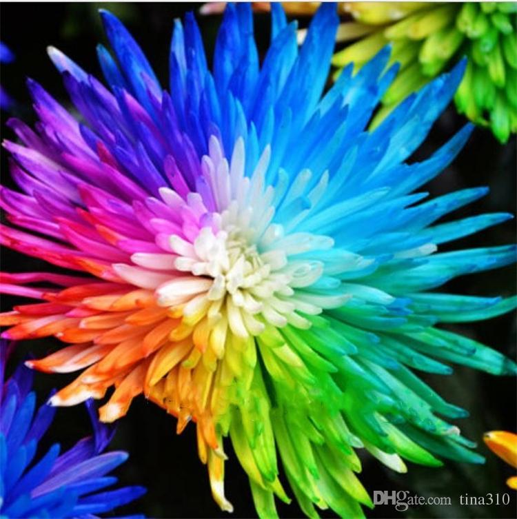 / bag Rainbow Chrysanthemum Flower Seeds Ornemental Bonsai, Rare Color, More Chrysanthemum Seeds Garden Flower Garden Supplies I186