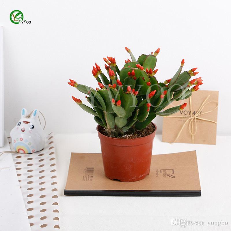 Балкон горшечные семена Китай кактус семена дерево горшечные бонсай двор дома сад бонсай завод 30 шт. T035