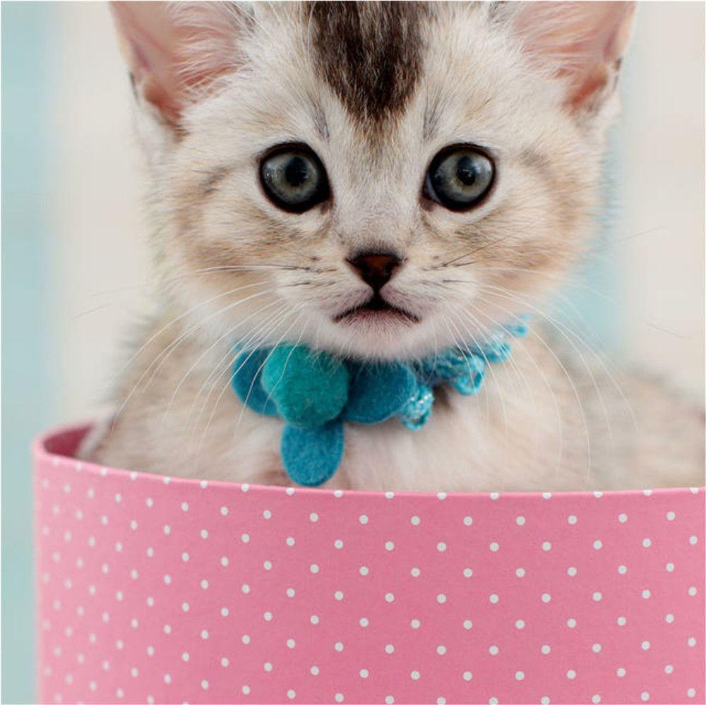 Style d'été grande marque Imprimer Enfants Designer bébé Vêtements pour enfants Présente la robe de chat Robe de fille belle robes de fille