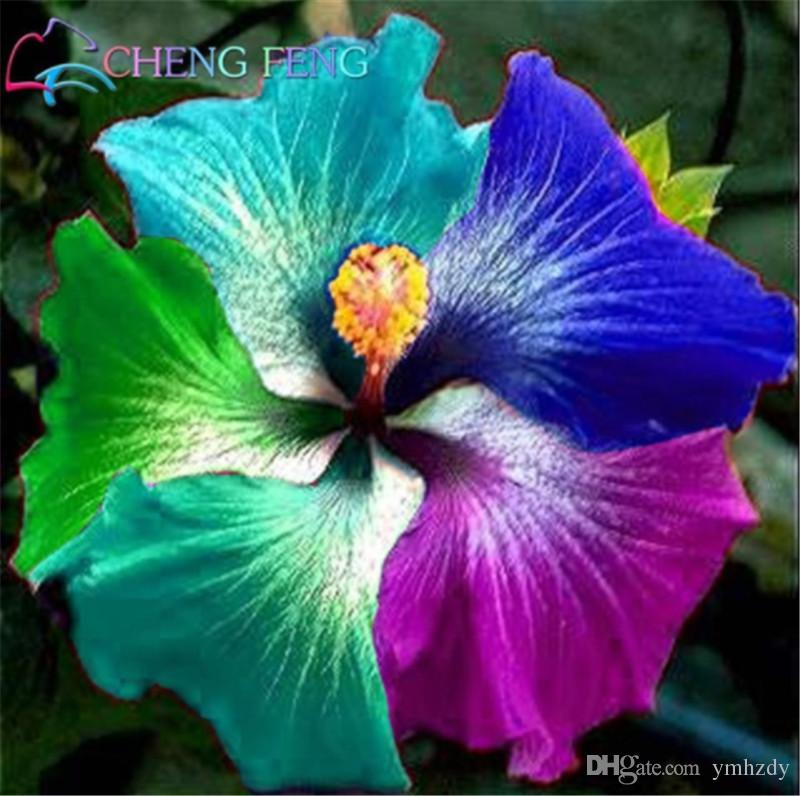 2019 Bag Giant Hibiscus Flower Seeds Giant Hibiscus Seed Rare