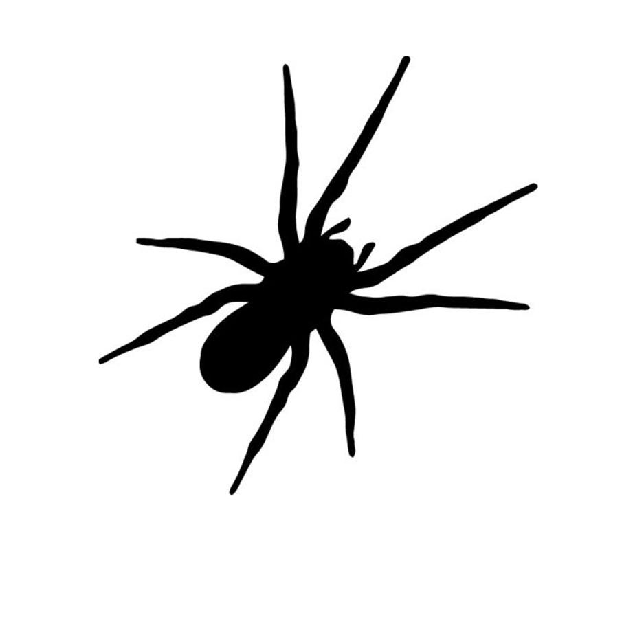 Spider Arachnid Insect Bug Scary Decal Window Bumper StickerCool Graphics  Car Decor