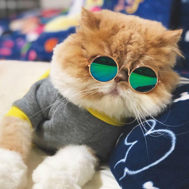0bd329ff4c84f Compre Moda Gato Óculos Pequeno Pet Óculos De Sol Grooming Eye Wear  Proteção Filhote De Cachorro Gatos Óculos De Cão Fresco Foto Props  Engraçado Produtos ...