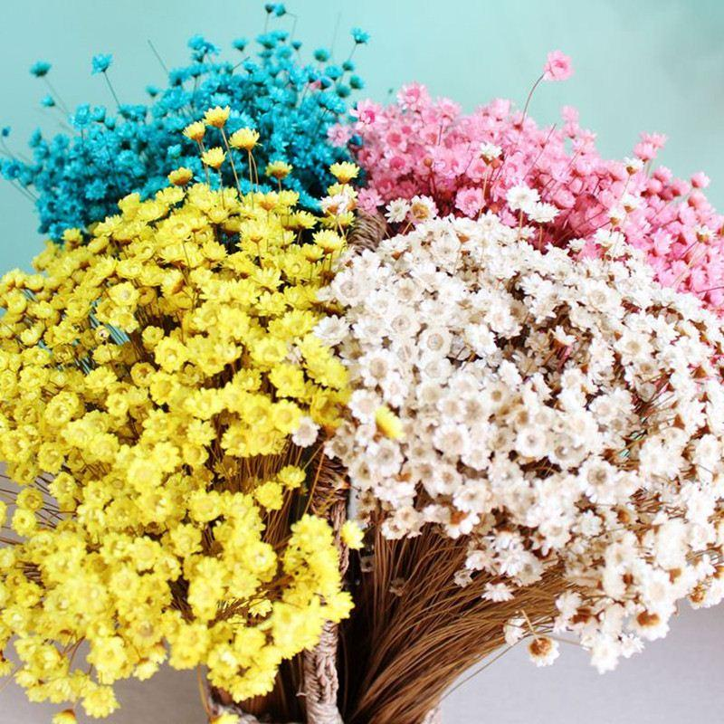 where to buy dried flowers in Singapore