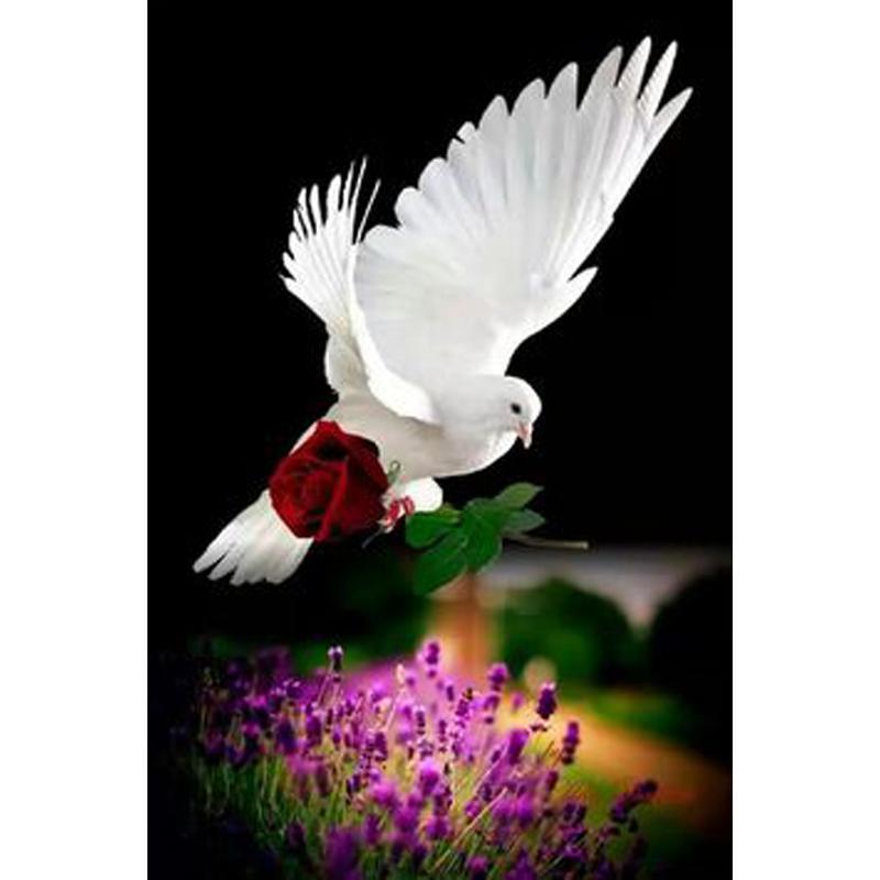 Satın Al 5d Diy Elmas Boyama Beyaz Güvercin Gül çapraz Dikiş Diy