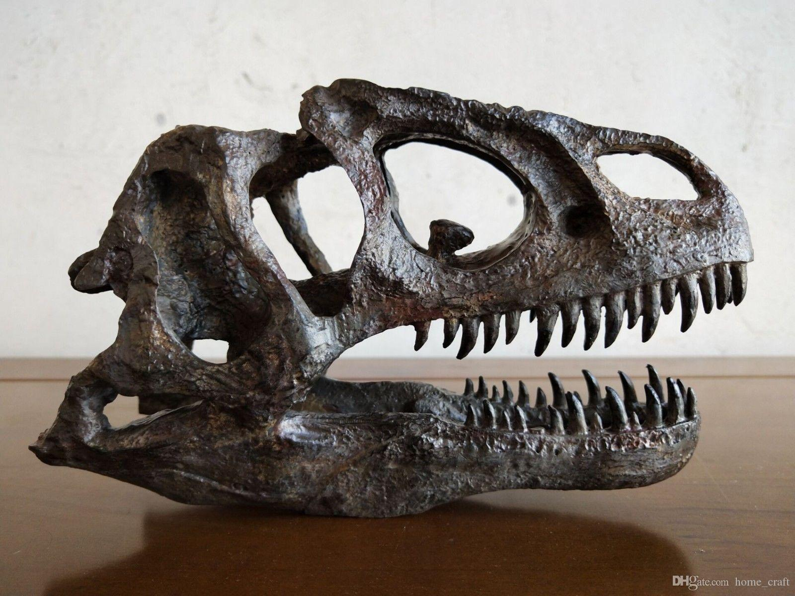 17 CM, modello Dinosaur / Allosaurus Skull Small Model YTL-B001