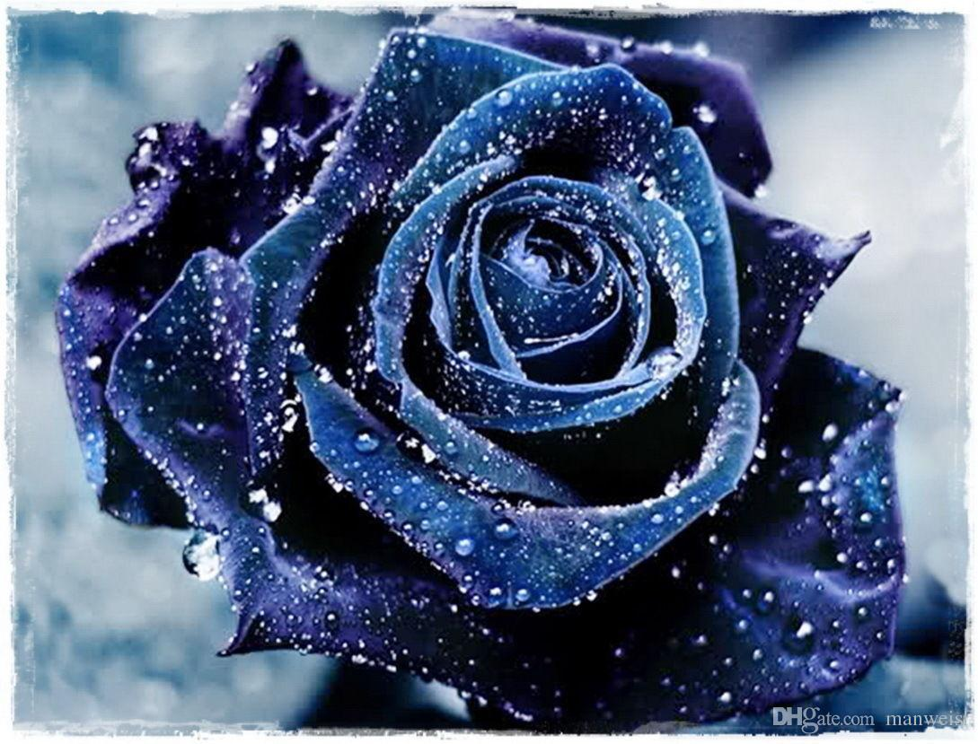 Fast Shipping Rare Beautiful Navy Blue Rose Flower Seeds *100 Pieces Seeds Per Package* New Arrival Two Colors Charming Garden Plants