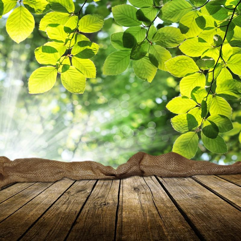 Laeacco Photographic Backgrounds Spring Green Tree Leaves Wooden Board Shiny Polka Dots Photo Backdrops Photocall Photo Studio