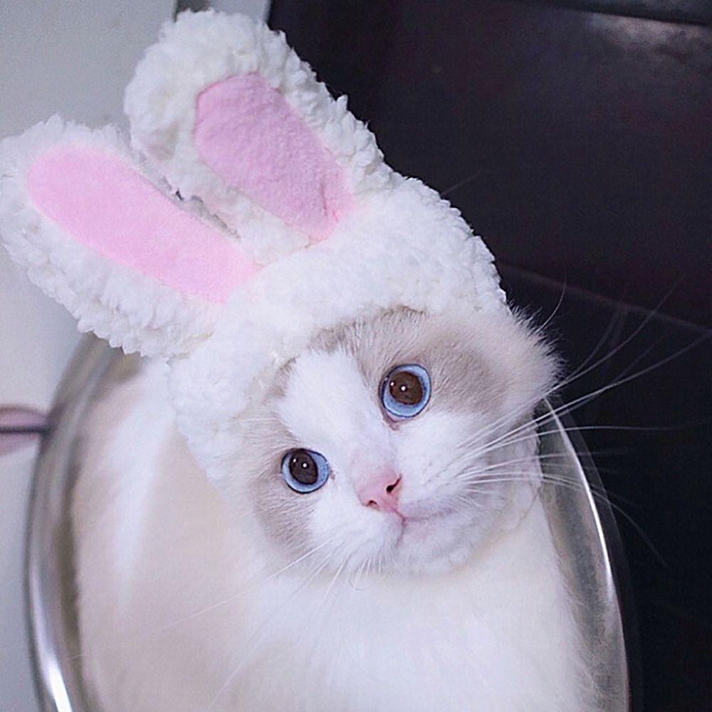 38917172836 Cute Rabbit Ear Cat Small Dog Hoodies Soft Knitwear Puppy Kitten Bulldog  Thin Sweater Bunny Ear Costume Cat Hoody Pet Clothes Cat Halloween Costumes  Women ...