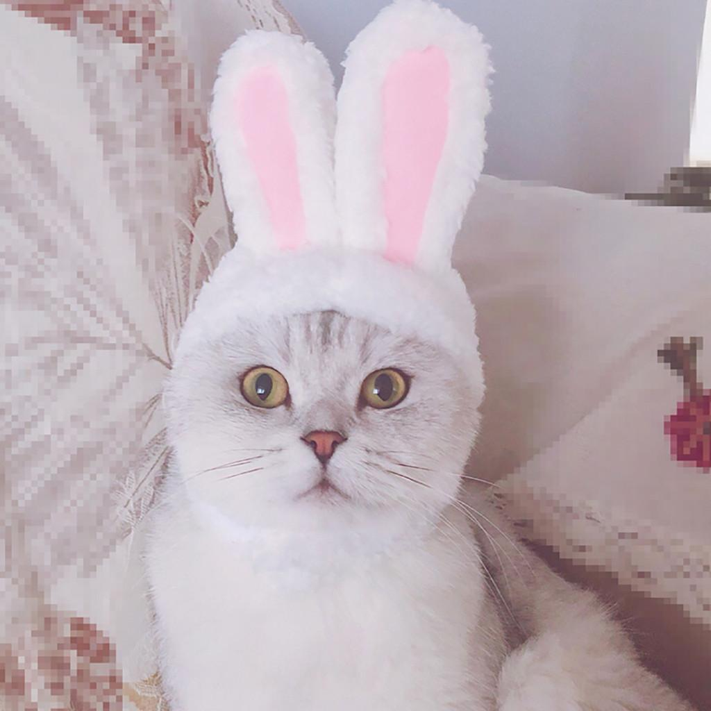 c4c20fb655f Dog Pet Bunny Rabbit Ears For Cat Small Dogs Kitten Party Pet Products Dog  Accessories Womens Cat Costumes Womens Cat Costumes Halloween From  Yujinnice