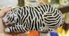 tigre d'argent