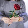 Красный без вазы
