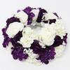 Белый фиолетовый 2-50 см