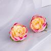 Jaune Rose