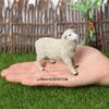 Мериновые овцы женщины