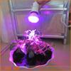 28 Red 10 Blue 180-240V Energy Saving Light E27 38LED Plant Grow Light Bulb Garden Hydroponic Lamp