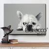 Cute Dog Little Butterfly Hand Painted Animal Oil Painting on Canvas Modern Home Wall Decoration No Framed
