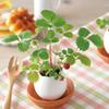 New Creative DIY Mini Lucky Egg Potted Plant Office Desktop Home Decor Basil Mint Mild Strawberry