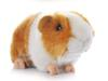 Wholesale- High Quality 18CM Kawaii Adorable Cute Pet Simulation Hamster Plush Toys Guinea Pig Animals Guinea Pig Doll Ornaments Gifts