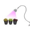 LED Grow Light with Clip Flexible Lamp Head Clip LED Plant Growth Light for Indoor or Desktop Plants US EU Plug