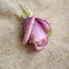 Jasny fiolet