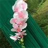 淡いピンク色の蘭