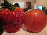 Top sale500 pcs / sac Géant graines de fraise Super gros Rouge Fraise Fruit Graine Délicieux bonsaï graines livraison gratuite