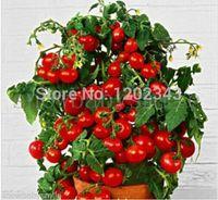 50+ 분재 토마토 씨앗 미니 체리 화분의 달콤한 과일 야채 유기 신선한