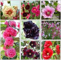 Prezzo di fabbrica a buon mercato Nuova casa giardino 100 semi Hollyhock Country Romance Mix Alcea Rosea semi di fiori Spedizione gratuita