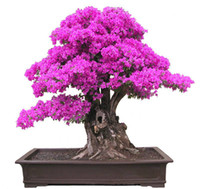New Real Blooming Plants Plants Sementes De Flores 50 Seeds ...