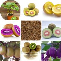 100 PCS Mini Actinidia Semillas de plantas con macetas pequeñas de árboles frutales Hermosas semillas de kiwis Bonsai (rojo, amarillo, verde, corazón púrpura)