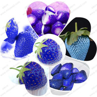 Organic fruits strawberry seeds rare blue fragaria ananassa ...