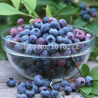 350pcs 7styles 정원 식물 과일 씨앗, 나무 씨앗 미국 블루 베리 푸른 열매 씨앗 sementes 드 frutas 야외 분재 나무