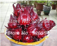 Hot selling 100 SEEDS ROSELLE (HIBISCUS SABDARIFFA) * CHINES...