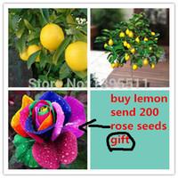 20 graines de citronnier, envoyer 200 graines de rose arc-en-ciel comme cadeau Bonsai graines d'arbres fruitiers pour la maison jardin pour jardin