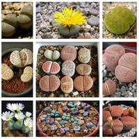 Pebble Plant Mix Graines Cactus Lithops Succulents Living Stones, Pack Professionnel, 100 Graines / Pack # NF964