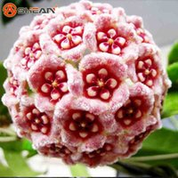 21 Color Available Rare Ball Orchid Flower Seeds Perennial G...