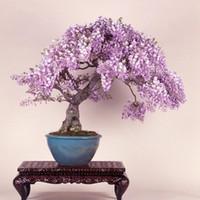 Pretty Bonsai Little Plant, Mini Potted Pink Cherry Tree Seeds 30 piezas