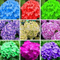 Bricolage Jardin 10 Graines Hortensia Natif Arboescens Lisse Sauvage Sevenbark Fleur Bush Arbuste Graines Livraison Gratuite