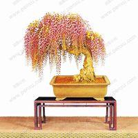 10шт редкий золотой мини бонсай глицинии дерево семена крытый декоративные растения посадки глицинии семена