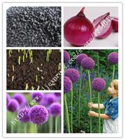 200 piezas de deliciosas semillas de cebolla, semillas de verduras púrpuras