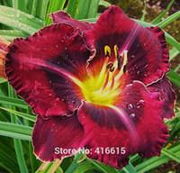 День Лилии семена лилейника Hemerocallis Эбони бассейны - семена Reblooming лилейник Hemerocallis Fulva цветок семена почвопокровные растения