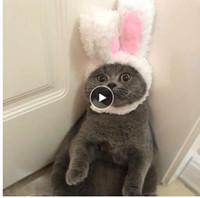 مضحك لطيف الحيوانات الأليفة حلي تأثيري الأرنب قبعة كاب ل القطة هالوين عيد الميلاد السنة الجديدة ملابس تنكرية الكلاب الصغيرة الملحقات